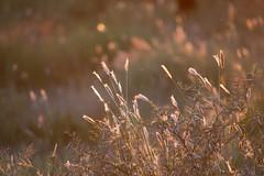 Namibia 2017 (Marianne Zumbrunn) Tags: namibia2017 namibia 2017 nikon d610 nikond610 nikon300mmf4pf gocheganas safari light sun evening color colour