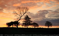 April Sunrise (STAFF.PAUL) Tags: canon canon500d canon18135efs thisphotorocks outside sunrise sun field tree nationalgeographic nature morning redditch worcestershire planetearth