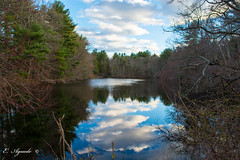 Reflection (E. Aguedo) Tags: reflection pond trees forest clouds sky blue goddard park warwick rhode island new england ngc