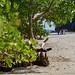 Locals in the Zanzibar Mangroves