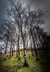 Trees at Darngarroch