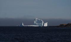 apr16 2017 31 (Delena Jane) Tags: delenajane iceberg ferryland newfoundland ngc newfoundlandcoastline canada macro 100mm pentaxart