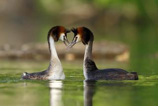 In love c