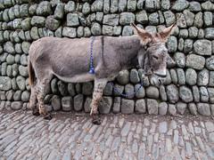 2009-09-28-0130.jpg (Fotorob) Tags: devon engeland voorwerpenoppleinened muur dieren wandelen travel city erfscheiding england clovelly