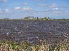 Over de Wiel (Jeroen Hillenga) Tags: bûtefjild netherlands nederland natuur nature natuurgebied oerdewiel friesland fryslân water winderig koud windy landscape landschap