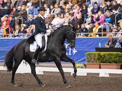 17429_Sydney_CDI_GPFS_0164.jpg (FranzVenhaus) Tags: athletes dressage australia equestrian riders horses ponies rug siec nsw sydney newsouthwales aus