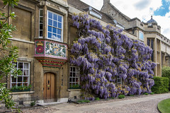 Christ's College, Cambridge (Ken Barley) Tags: cambridge christscollege firstcourt wisteria