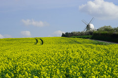Chishill Windmill (landscape) (Jayembee69) Tags: chishillwindmill greatchishill cambs cambridgeshire windmill postmill yellow gold golden oilseedrape crops field sun countryside country rural agriculture hill uk unitedkingdom england english britain british
