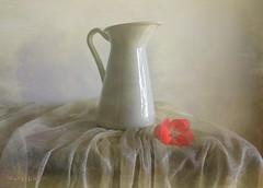 Still Life with Little Geranium Flower ... (MargoLuc) Tags: pink flower white jug pastel soft tones spring stilllife natural light window minimalism shadows texture skeletalmess