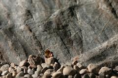 Pfeiffer Big Sur (Tony Pulokas) Tags: pfeifferbigsurstatepark california bigsur rock spring bigsurriver leaf alder tilt blur bokeh