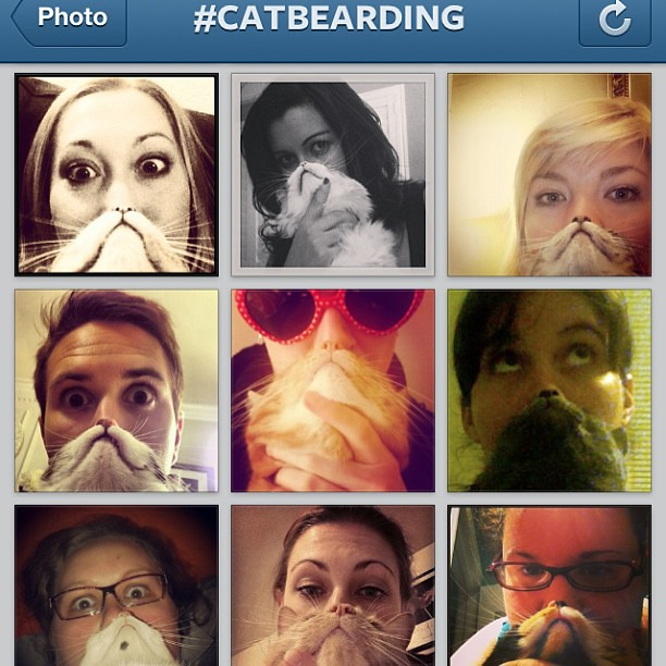 Aaaaah! How is it that I'm just now finding out about cat bearding?!? This changes everything.