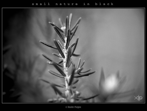 small nature in black · #04