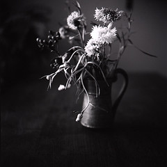 Flower* (miki**) Tags: flowers 120 monochrome mylife rolleiflex35f rolleinar2