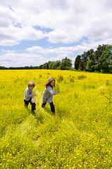 fields of gold (DWO630) Tags: green field yellow virginia district running landmark historic national va springs louisa memorialdayweekend 2013 pentaxk01