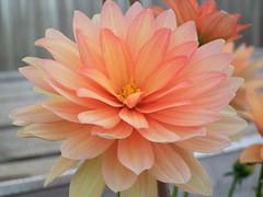 Flower beauty #2