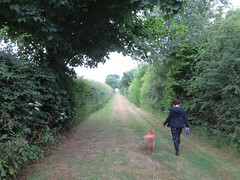 country path (squeezemonkey) Tags: dog walking countryside path tunnel hedge footpath tetford