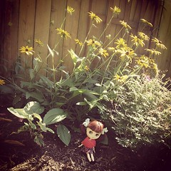 An imp in my flowers!