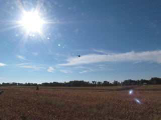 South Dakota Pheasant Hunt - Pierre 27