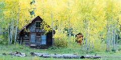Took this near Crystal Mill on Monday - love the intimacy of this small cabin and the aspens glowing with their fall colors. (JoshTrefethen.com) Tags: fall mill love colors this cabin with crystal near small aspens glowing their monday took intimacy