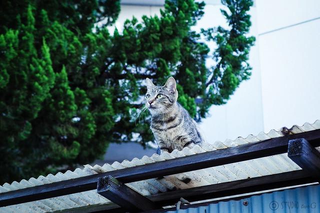 Today's Cat@2013-10-17
