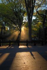 Morning light in the park (digital-dreams) Tags: nyc newyorkcity newyork unitedstates centralpark hdr johnchandler lightroom photomatixpro nikond800 johnsdigitaldreamscom