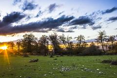 """La Puesta"" (Dani Atz) Tags: trees sunset naturaleza sun tree verde green sol nature clouds landscape arboles paisaje nubes puestadesol navarra urbasa"