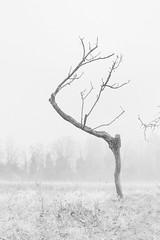 L1020130-Modifica (FloBue) Tags: italien winter blackandwhite italy tree fog italia nebel hills bologna schwarzweiss nebbia albero inverno baum biancoenero 2012 huegel colli
