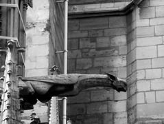 paris 1 (ondey) Tags: paris france church de europe cathedral gothic medieval notredame gargoyle cathédrale notre dame francie kostel evropa katedrála paříž chrám gotika středověk chrlič