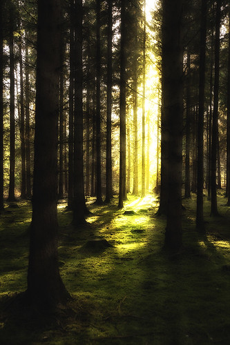 Forest light 1 (72763421@N05), photography tags:  vision:dark=093 vision:plant=0758 vision:street=0817