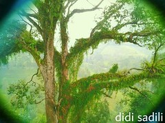 kini, begitu berartinya sebuah pohon (didisadili) Tags: hutan kebun pohon penghijauan jakartahijau