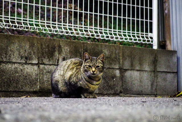 Today's Cat@2013-12-25