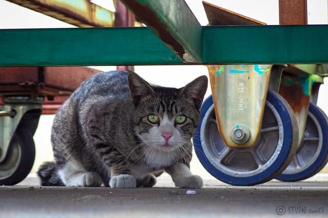 Today's Cat@2014-03-26