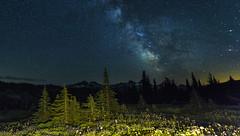 Milky Way over Tatoosh Range (Mt Rainier NP, WA) (Sveta Imnadze) Tags: nature landscape mtrainiernp wa stars starrysky trees milkyway