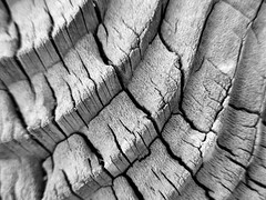Texture  7DWF Crazy Tuesday Theme (seanwalsh4) Tags: 7dwf crazytuesdaytheme canon sean walsh woodenpost structure happy peace love textures