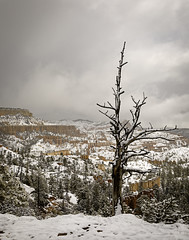 90246936922-87-Tree Hanging Over the Edge of Bryce Canyon on a Snowy Day-1 (Jim There's things half in shadow and in light) Tags: 2017 america brycecanyon canon5dmarkiv march nationalpark sigma24105mmf4dg southwest us utah earth landscape natrue sky snow landsape tree cliff clouds