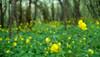 Consciously lost (Radoslav Minchev) Tags: съзнателно consciously загубен lost гора forest цветя flowers пролет spring хижа hut божур bozhur велико veliko търново tarnovo българия bulgaria