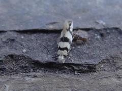 DSC00164 (familiapratta) Tags: sony dschx100v hx100v iso100 natureza inseto insetos nature insect insects