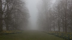 087/365 (neals pics) Tags: fog weather trees park path avenue grass flowers yellow green grey visibility unknown journey mystery lime 365the2017edition 3652017 day87365 28mar17