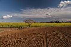 Tierra y cielo (Aristides Díaz) Tags: nubes flores primavera sevilla dos hermanas