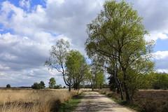 Het is alweer een beetje groen op de Strabrechtse Heide/ It's already a little bit green on the Strabrechtse Heath. (truus1949) Tags: wandelen heeze strabrechtse heide lente landschap natuur bomen wolken