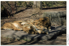 Zoo Zürich Schweiz (Mr.Vamp) Tags: zooh zoo tiergarten tiergatenschweiz schweiz zoozürich tiergartenzürich mrvamp