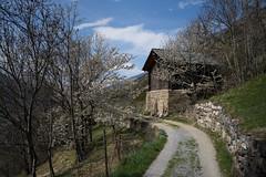 spring (Toni_V) Tags: m2403637 rangefinder digitalrangefinder messsucher leica leicam mp typ240 type240 28mm elmaritm12828asph hiking wanderung randonnée escursione turtmannvisp visp rhonetal wallis valais switzerland schweiz suisse svizzera svizra europe frühling spring oberwallis ©toniv 2017 170401