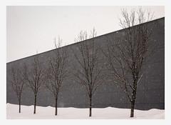(Guy Ducharme) Tags: villedequébec quebeccity saintefoy hiver winter neige snow arbres trees