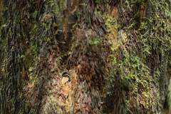 Fern ((arteliz)) Tags: plant flora fern ferns bokeh helios442 arteliz artelizphotography dandenongs forest trees plants victoria australia australianplants