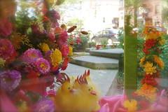 DSC03820 (Putneypics) Tags: easter spring flower chick storefront window retail display newburystreet boston putneypics