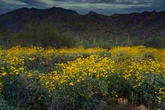20170320-DSC_4936 (lilnjn) Tags: arizona landscape southwestunitedstates travel unitedstates sky sunrise whitetank