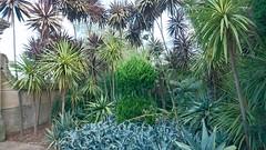 Botanical Garden (ckrahe) Tags: sydney