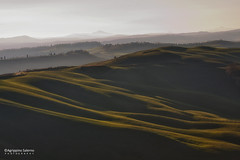 Lights and shadow (Agrippino Salerno) Tags: italy tuskany cretesenesi light shadow hills sunrise morning dawn beautiful green agrippinosalerno canon manfrotto