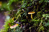Fungi - 01 - Enchanted Forest (Cristian González Photography) Tags: patagonia chileanpatagonia visitchile visitsouthamerica green nature natureperfection naturebrilliance forest fungi fungus nothofagus greenforest tr trekking travelling