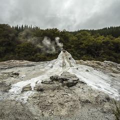 Nouvelle Zélande 2017 (ArmoNelga) Tags: newzealand waiotapu landscape geothermal geyser ladyknox